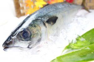 【魚漢字クイズ】クイズ!!氷下魚って何て読む?ヒントは北海道の魚だよ